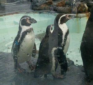 北海道 ペンギン