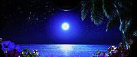 南国物語A 月夜