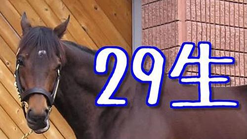 29生(ニクナマ)